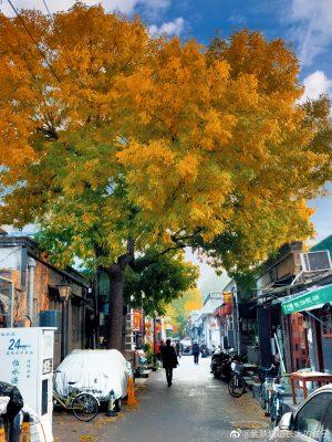 Hẻm Nam La Cổ mùa lá chuyển màu