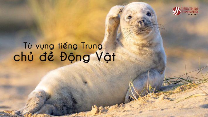 Từ vựng tiếng Trung về chủ đề Động vật